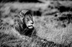 Au coeur du Maasaï Mara